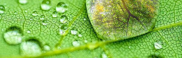 Medio Ambiente, Contaminación del agua, fosas sépticas